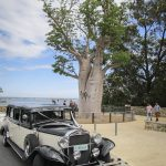wedding-cars-at-kings-park-perth-1